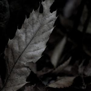 image-1466