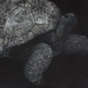 象亀・Giant tortoise