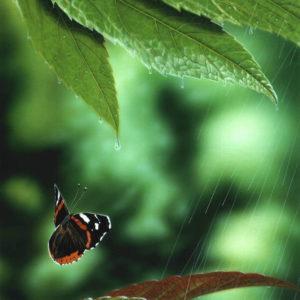 蝶の雨宿り