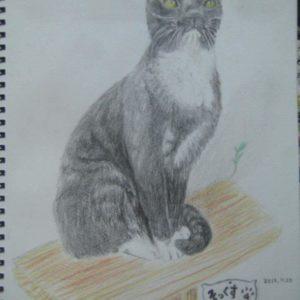 ソックスという名の猫−Cat named Socks−